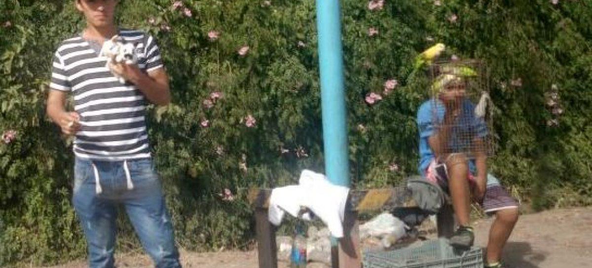 Indignación de vecinos por venta callejera de animales salvajes y mascotas