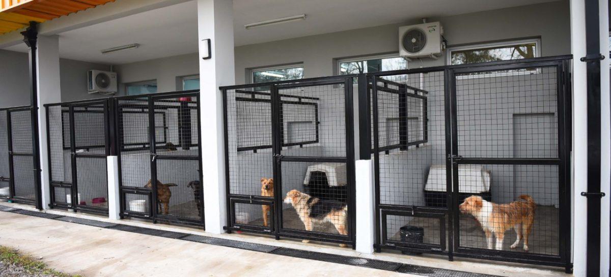 Se lanzó una campaña para la adopción de mascotas en el partido de Escobar