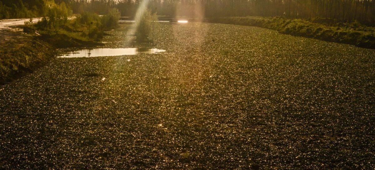 Proyecto de ordenanza: Ariel Sujarchuk propone ampliar el área de protección de humedales a 11.500 hectáreas