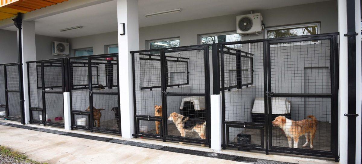 El portal web de la Municipalidad ofrece toda la información necesaria para adoptar mascotas del Hospital de Zoonosis