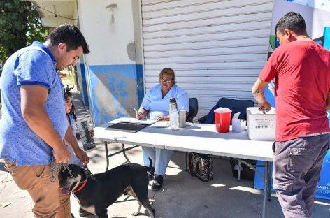 Los habituales operativos sanitarios de la Municipalidad de Escobar se realizarán en Maquinista Savio