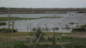 Imagen (14-10-19) parcela ah inundada luego tormentar reciente
