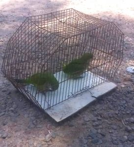 thumbnail_venta de aves 1