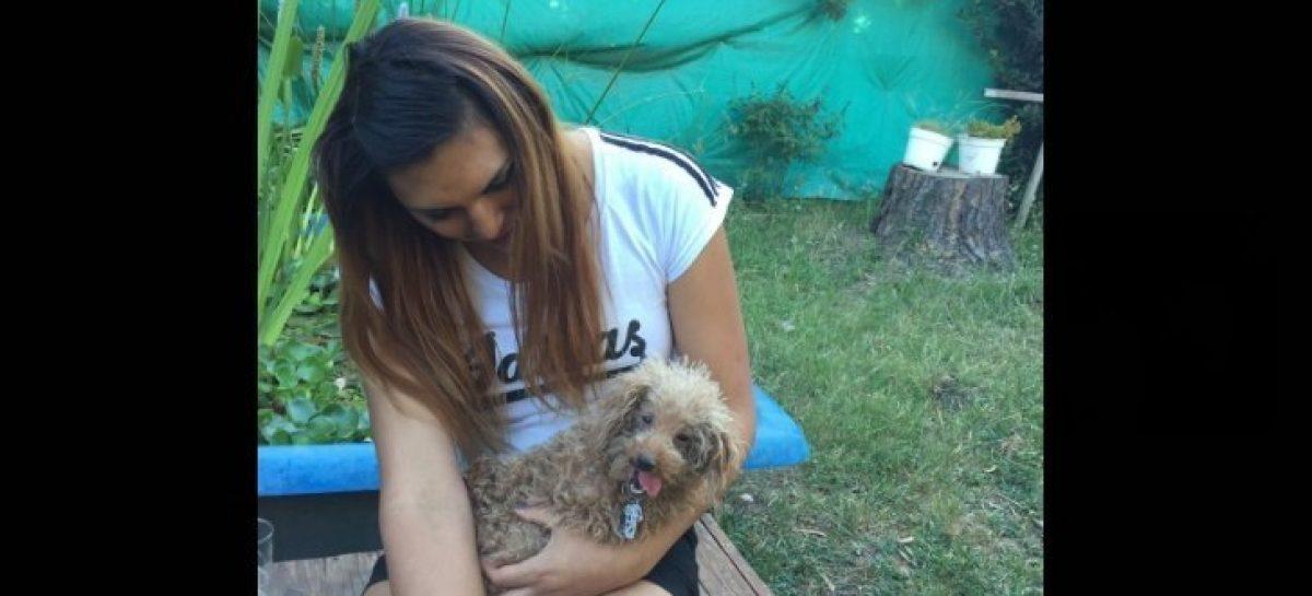 A través del portal web del Hospital de Zoonosis de Escobar, 20 mascotas consiguieron un nuevo hogar