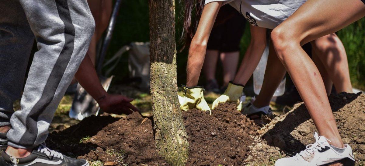 """Escobar Sostenible: los vecinos y vecinas podrán apadrinar un árbol en el marco del Plan de Arbolado Urbano """"Plantando Conciencia"""""""