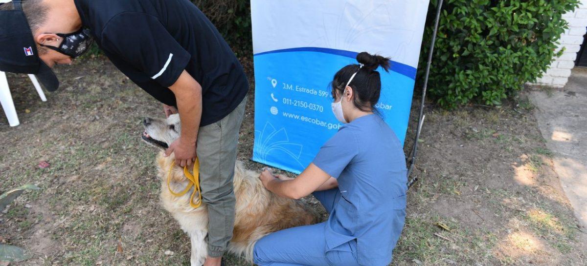 Más de 1300 mascotas ya recibieron la vacuna antirrábica durante la primera semana de la campaña anual