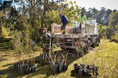 Mes del Árbol: la Municipalidad impulsa nuevas jornadas para seguir plantando árboles en todo el distrito