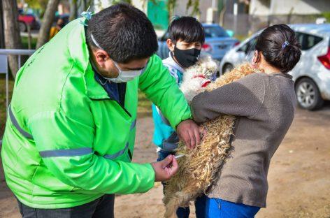 Zoonosis Escobar: continúa en Matheu la campaña de vacunación antirrábica para mascotas